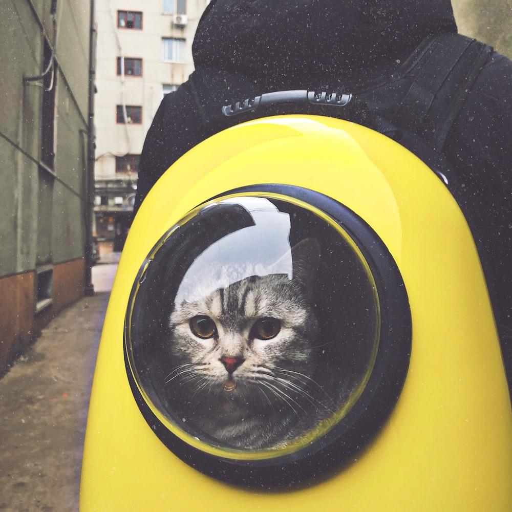 قطة رمادية اللون في حقيبة ظهر باللونين الأصفر والأسود