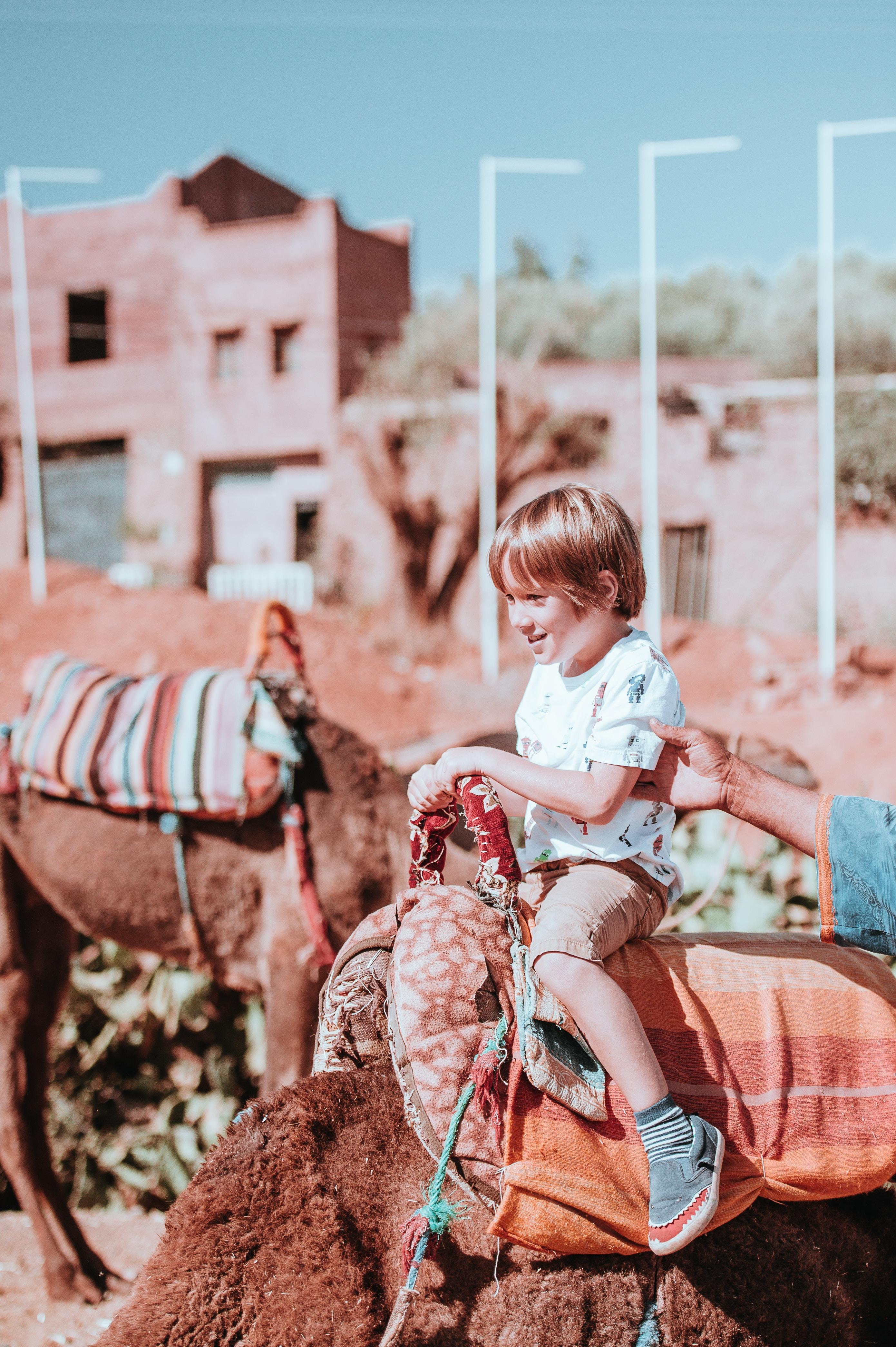 boy riding animal during daytime