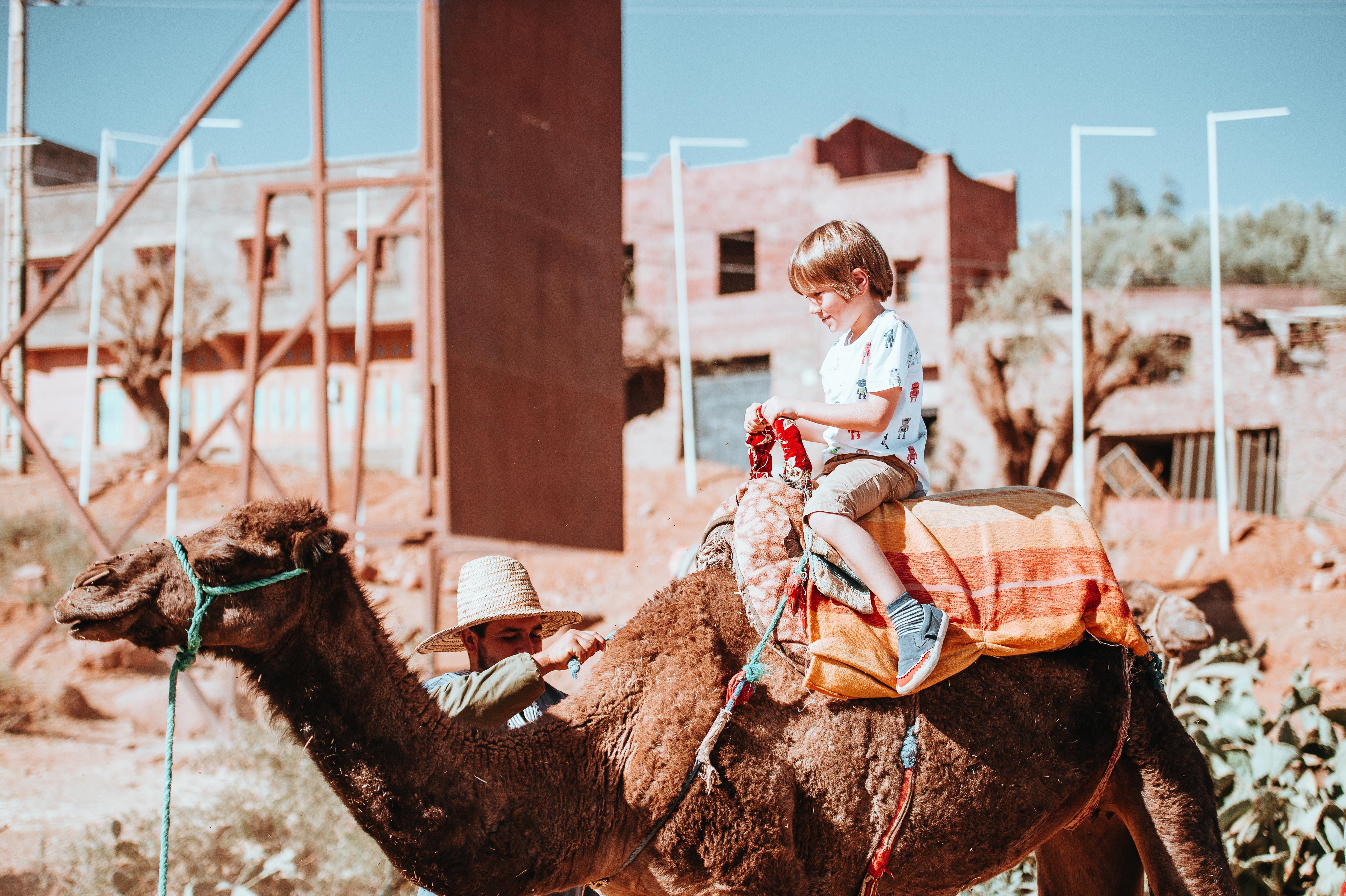 boy riding camel beside man