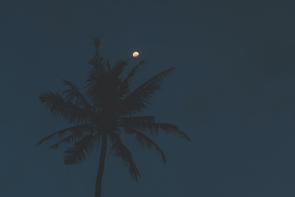 low-angle shot photography of palm tree
