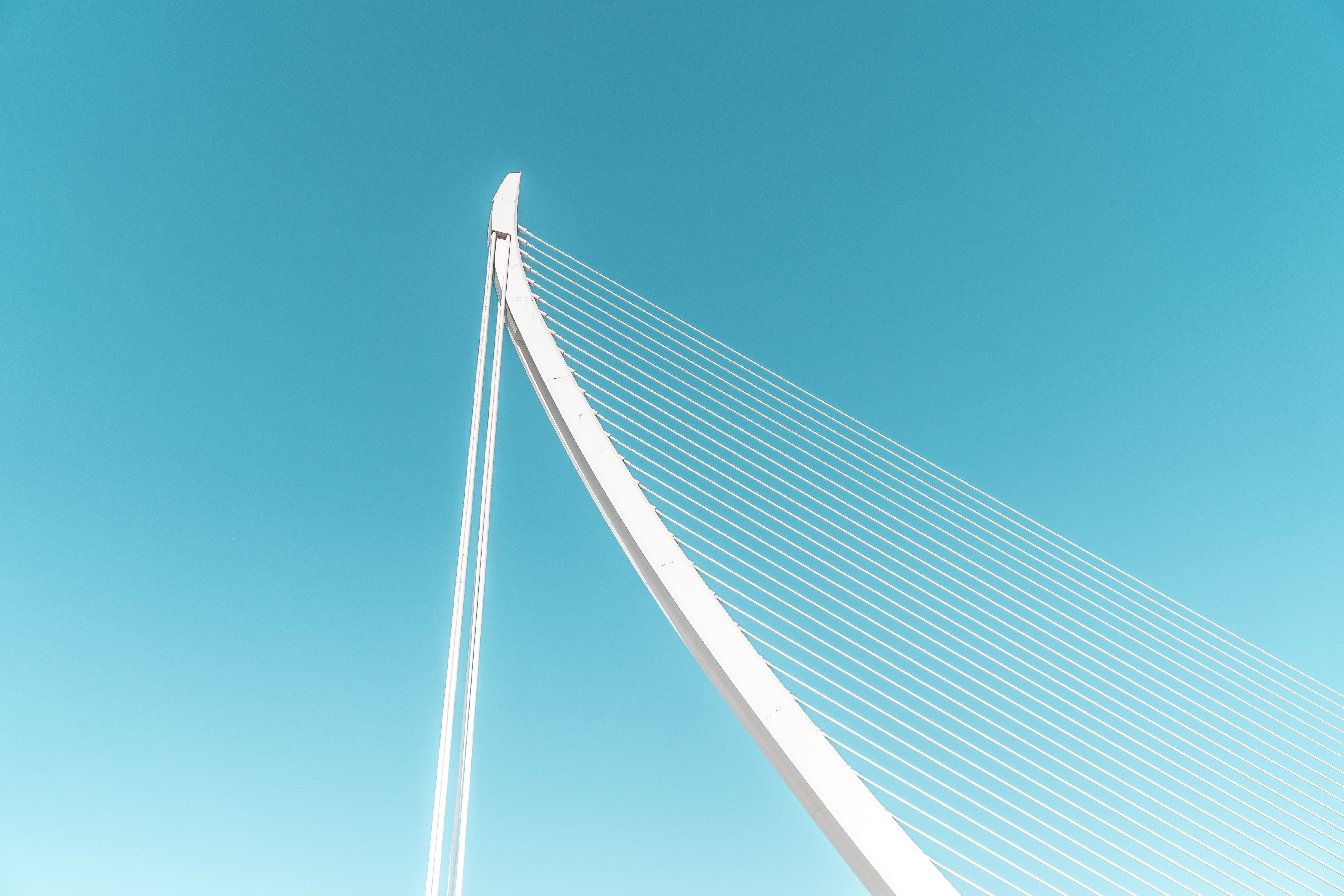 low angle photography of white cable-stayed bridge