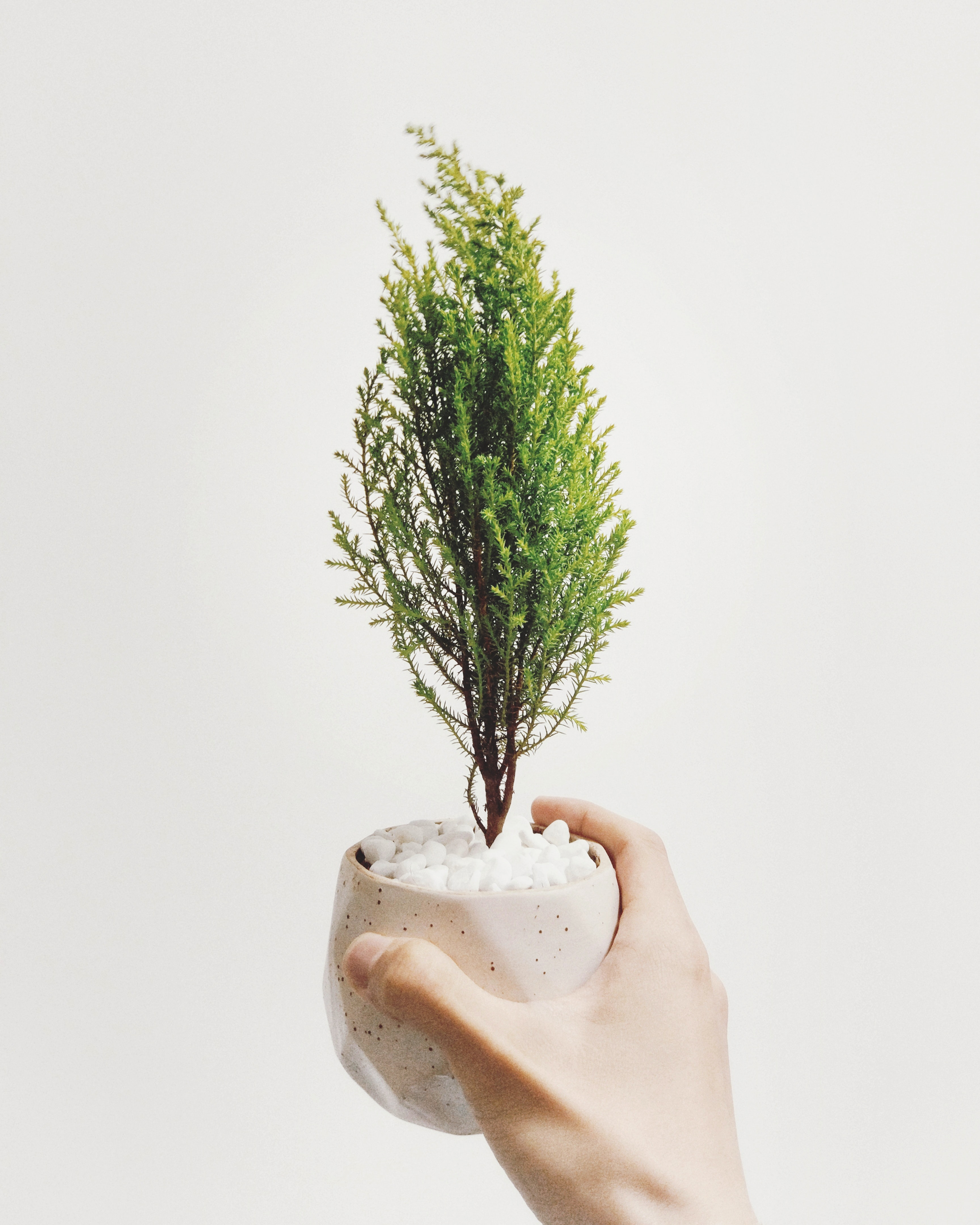 person holding vase of green leafed plant