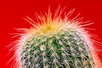 closeup photography of green cactus