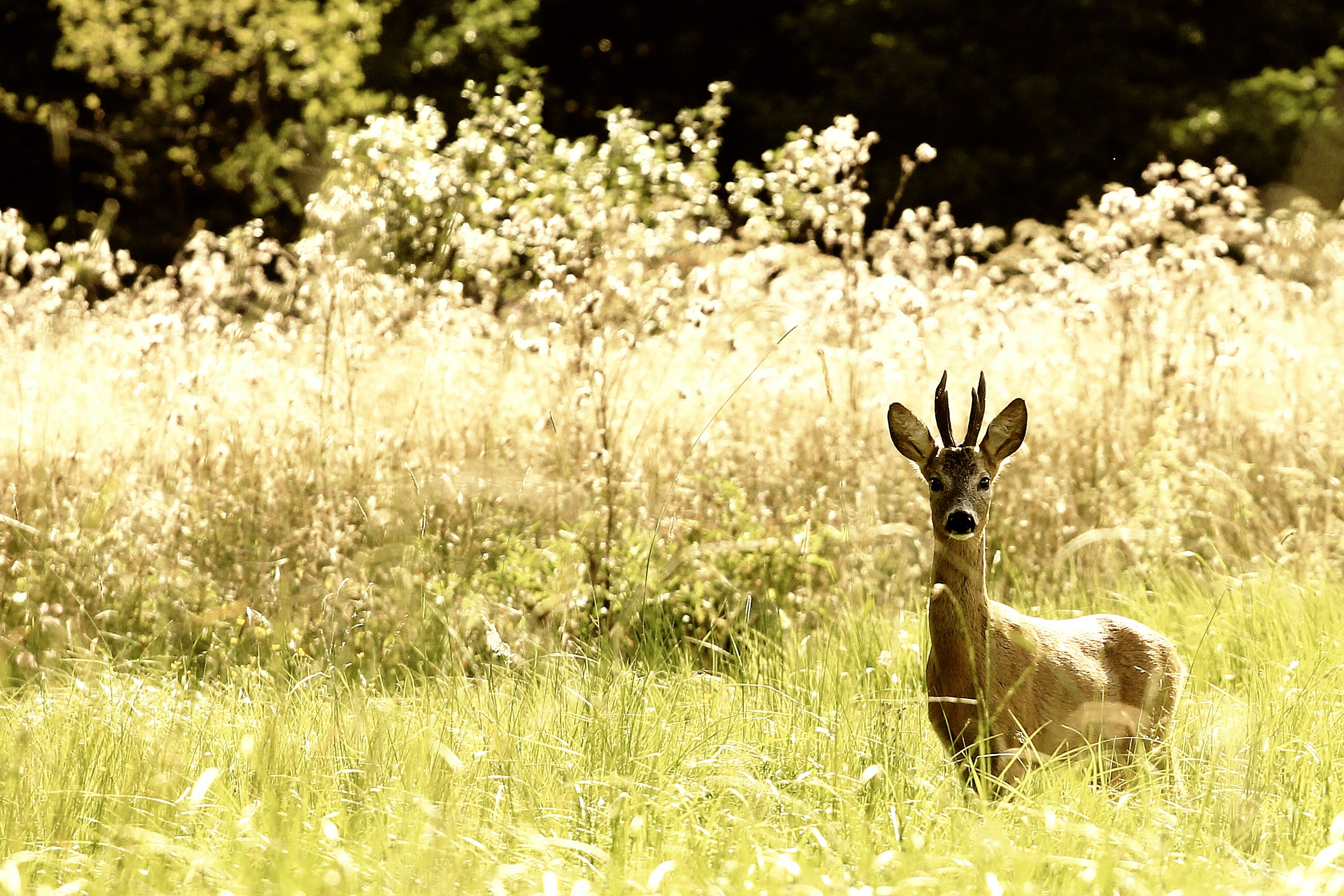 deer on grass field during daytime