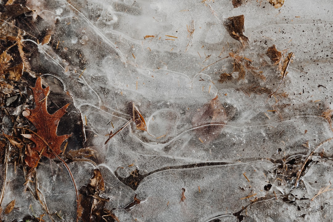 Layers of Frozen Leaves