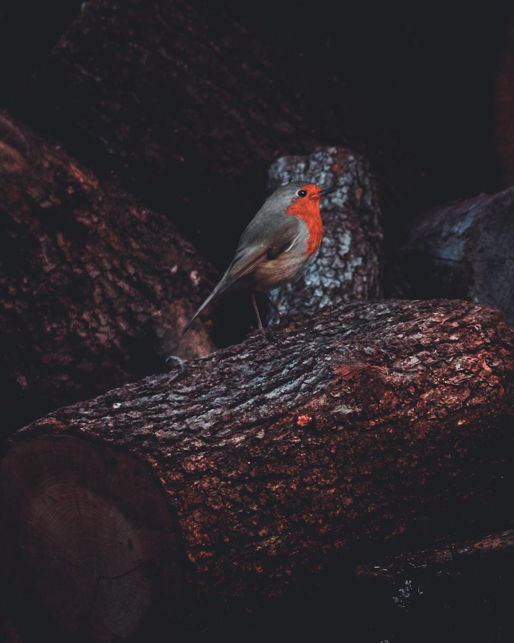 gray and orange bird on tree