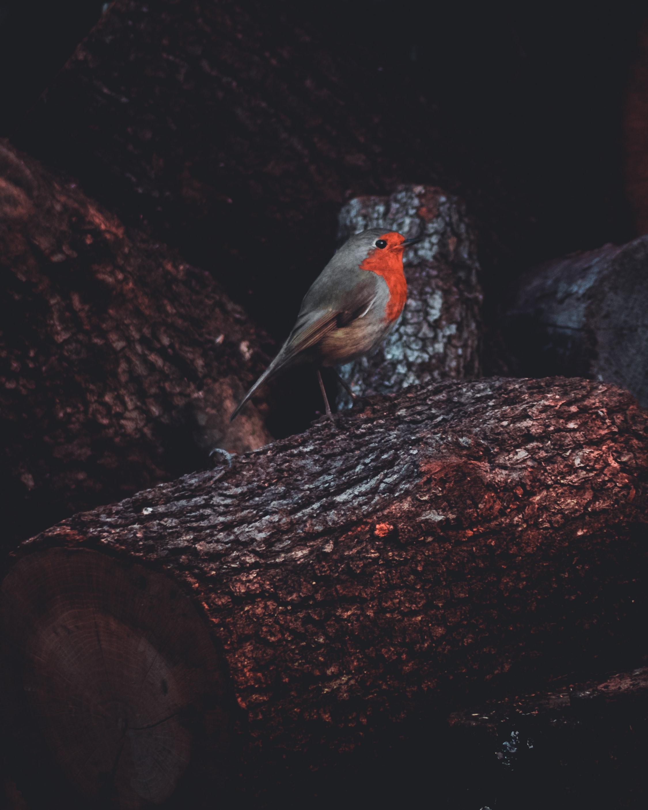 gray and orange bird on tree