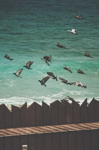 flock of birds near on the body of water