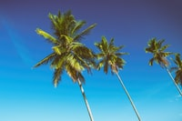 4 coconut trees under blue sky during daytime