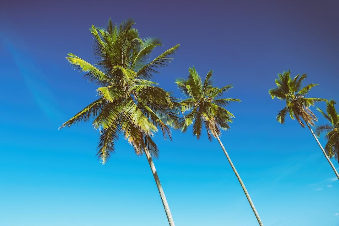 Some palmtrees at Resende Beach, Itacaré, Brazil.