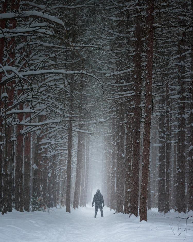 golden forest pathway photo by johannes plenio jplenio