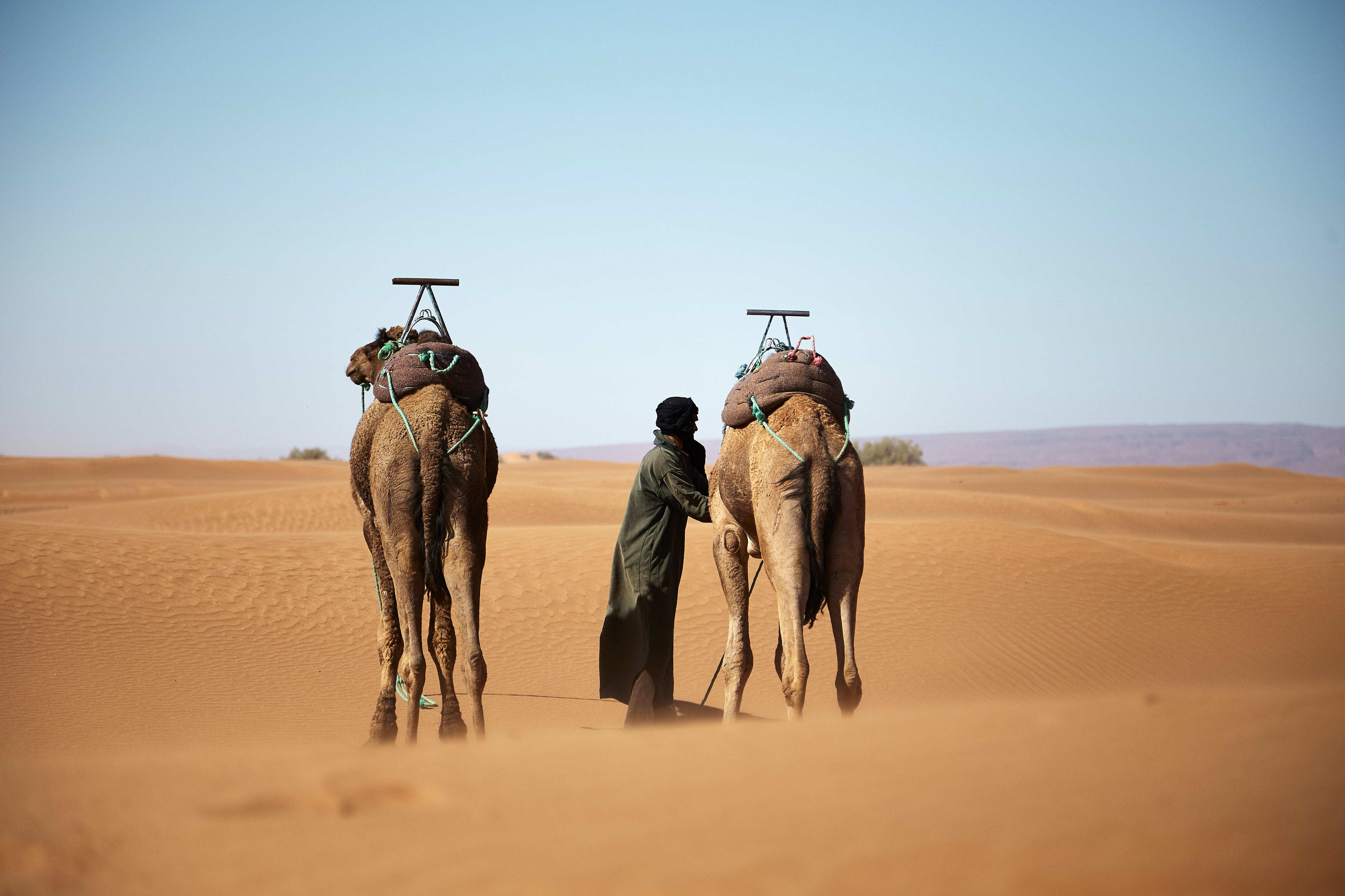 person walking with two camels on desert during daytime