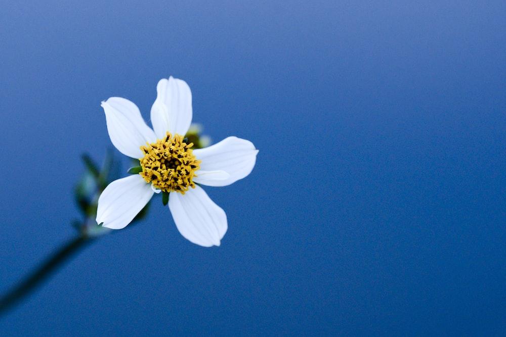 macro photography of white flower