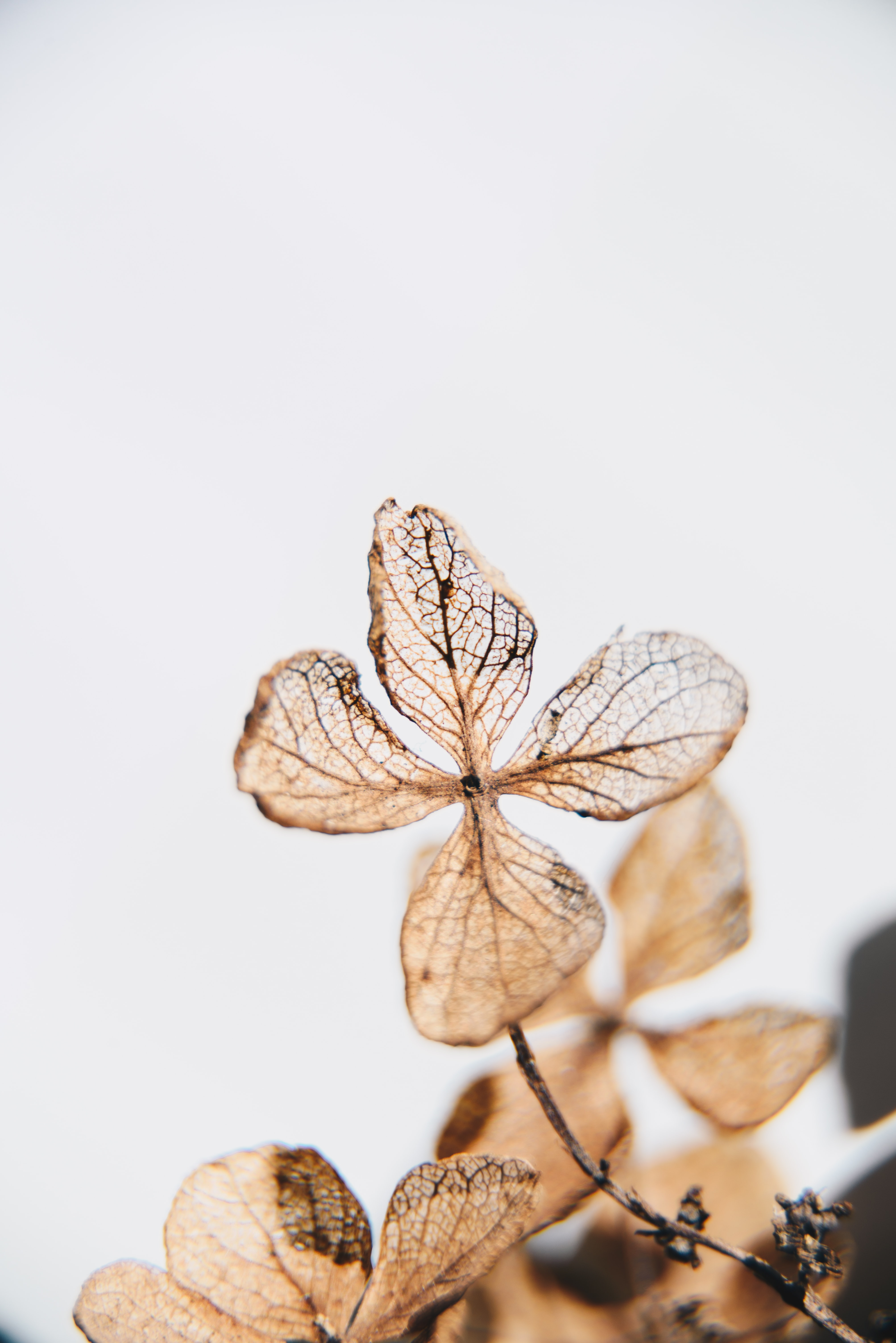 brown four-leafed plant