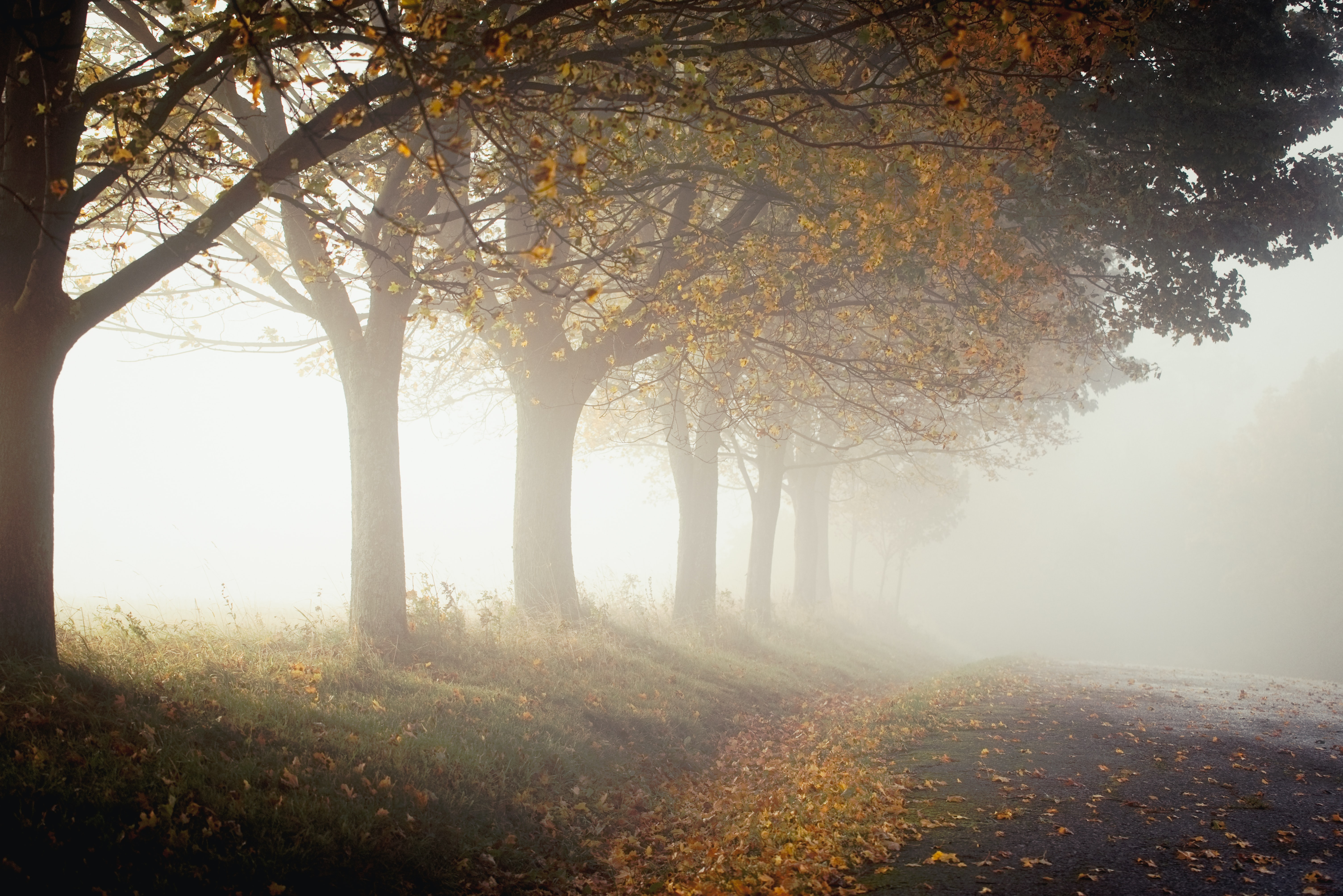trees with fogs during daytime