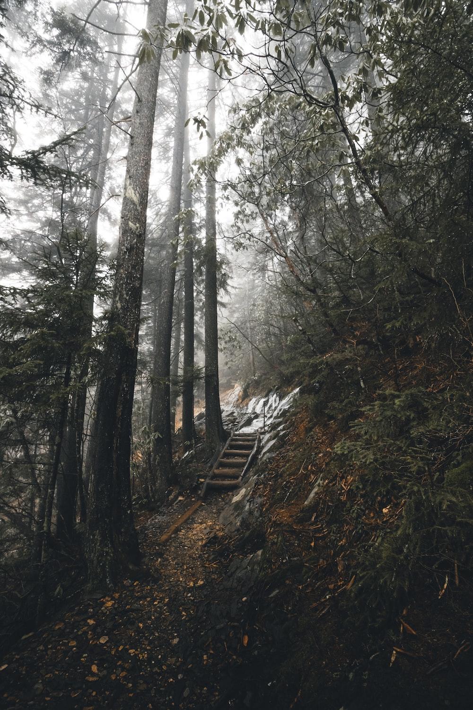 brown wooden stair between trees