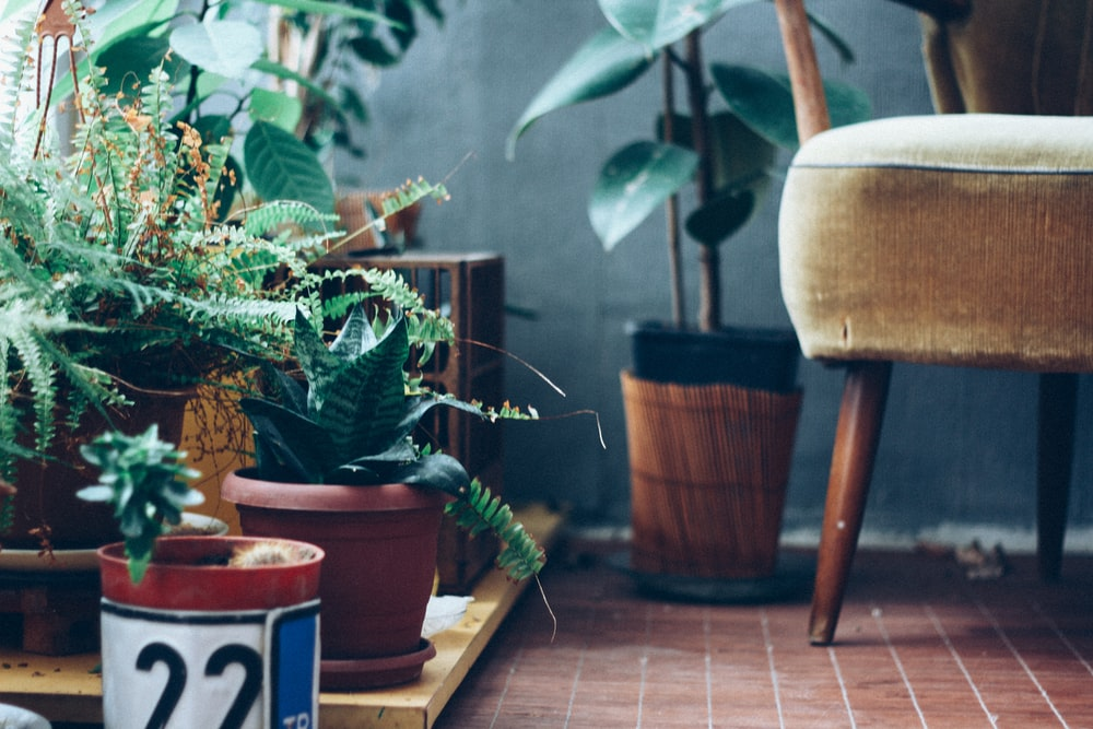 green fern plant and succulent plants