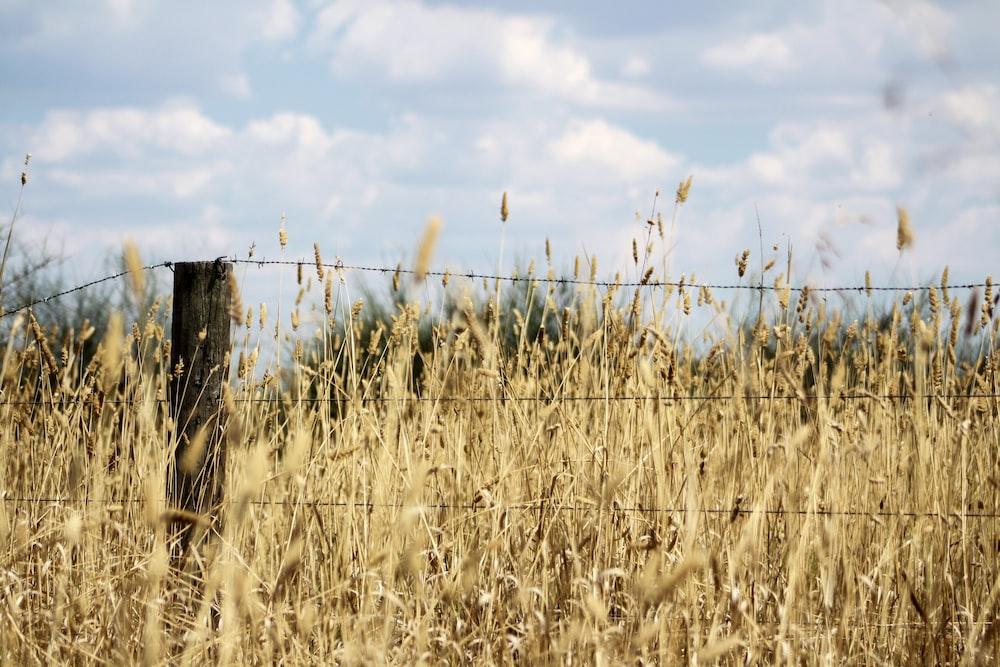 barbwire near grass