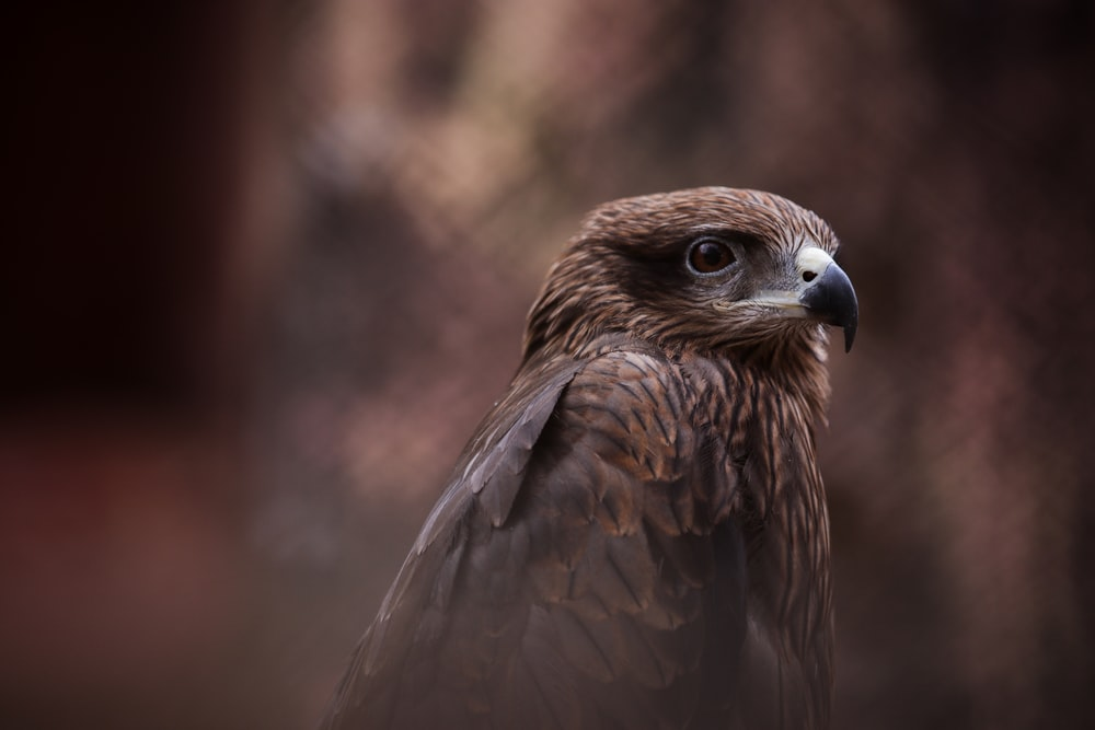 selective focus photography of brown hawk