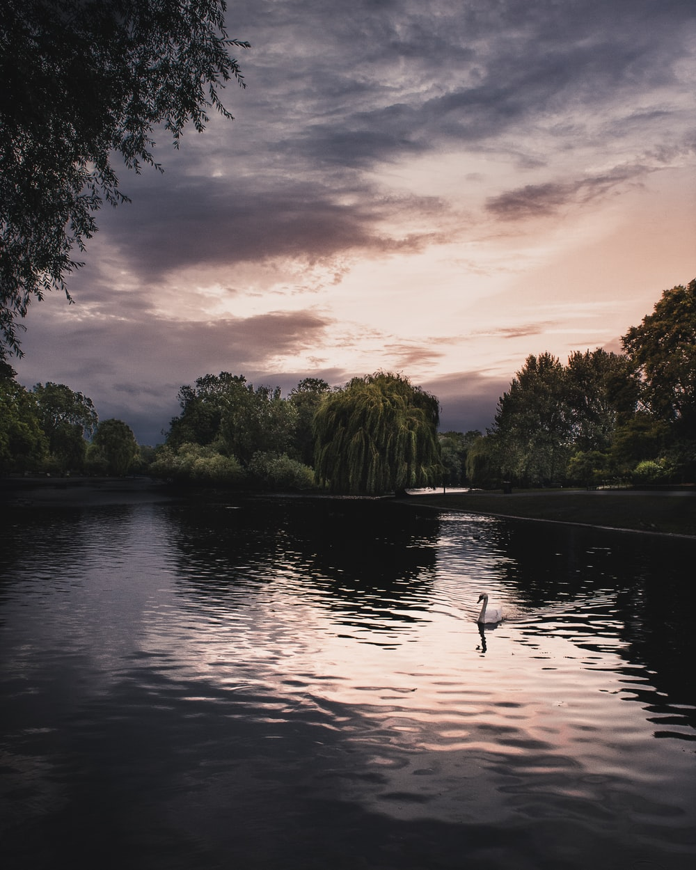 swan on body of water surrounded by trees under cloudy sky