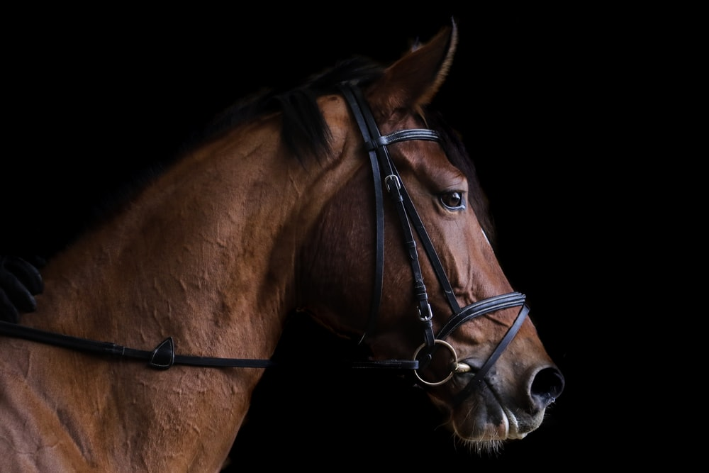 closeup photo of brown horse
