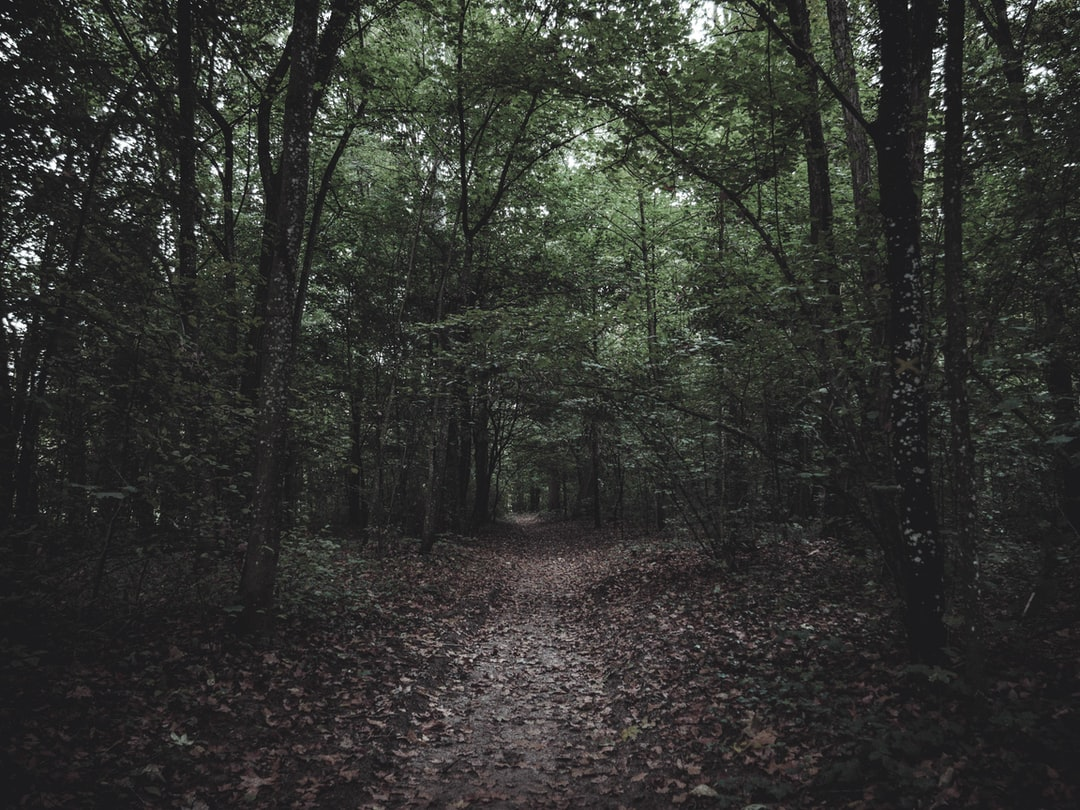 The Path under the Trees