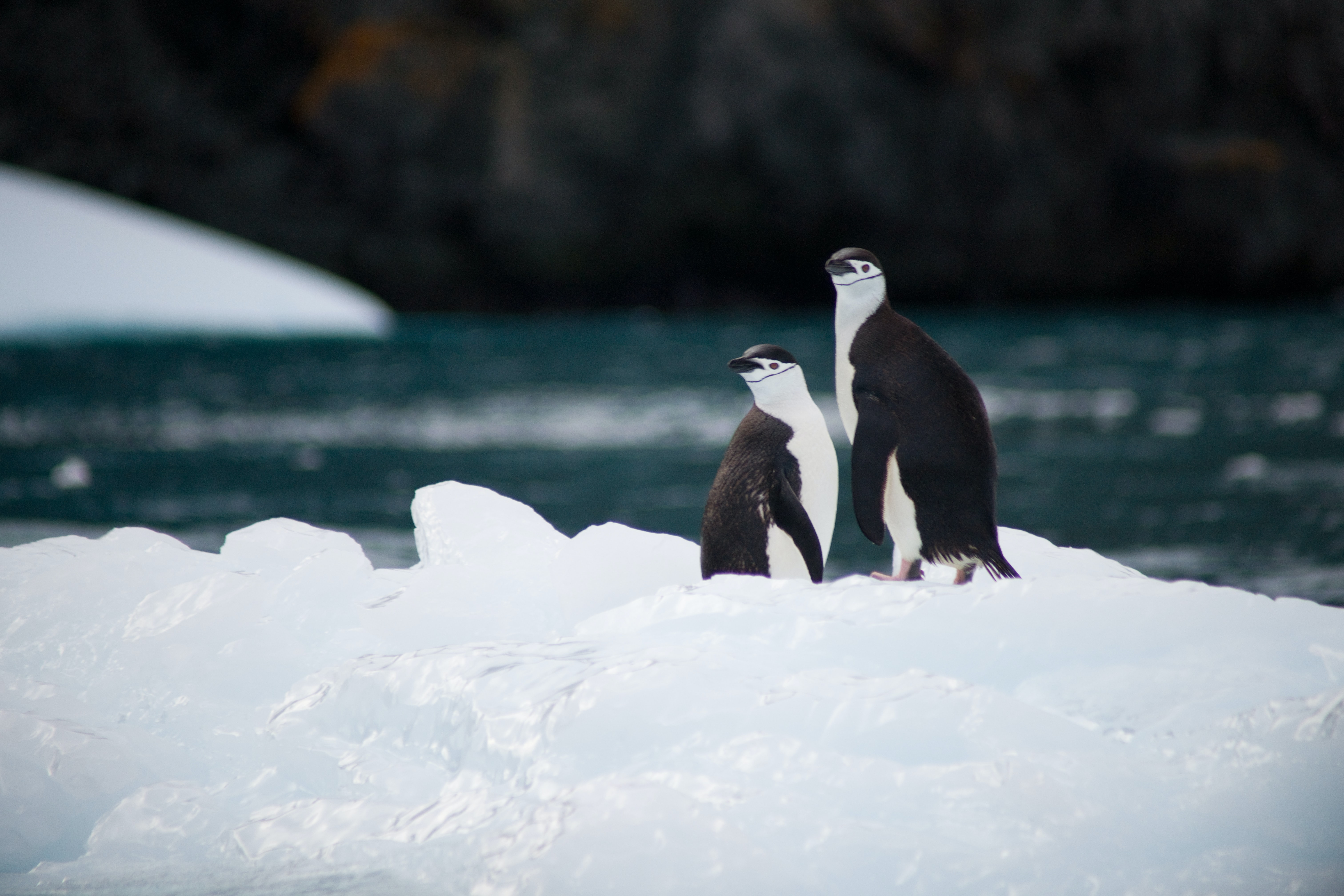 two penguins standing on rice near body of water