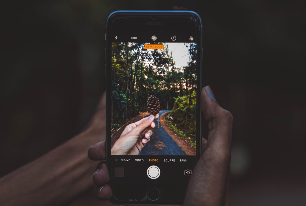 person taking photo of finecone