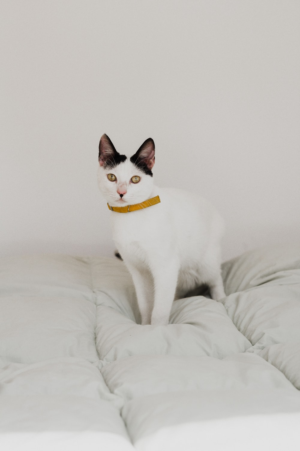 short-haired white cat on white bed