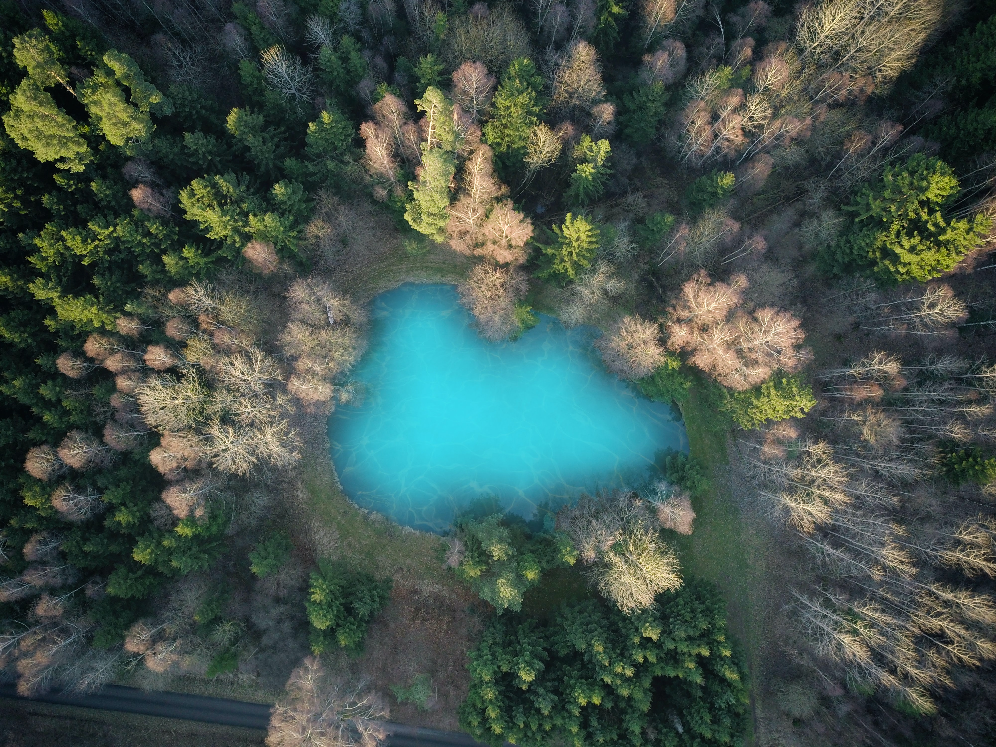 bird's eye photography of lake in middle of forest