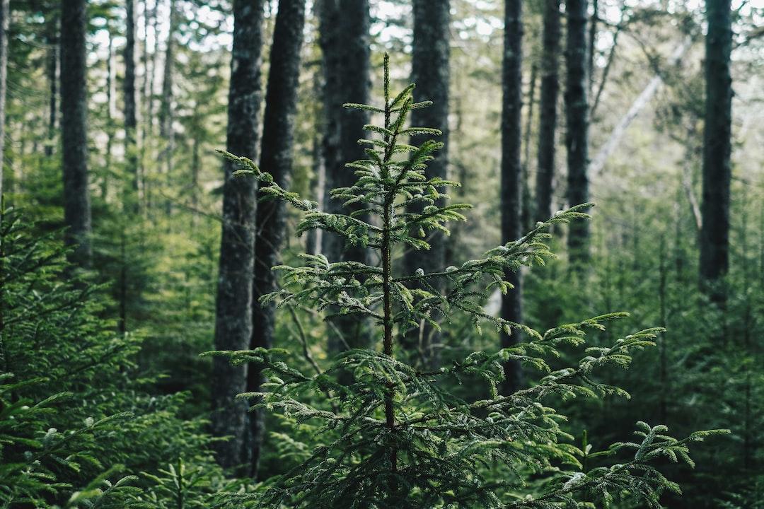 Tree in Acadia National Park