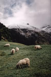 Hunters in the Dark  sheep stories