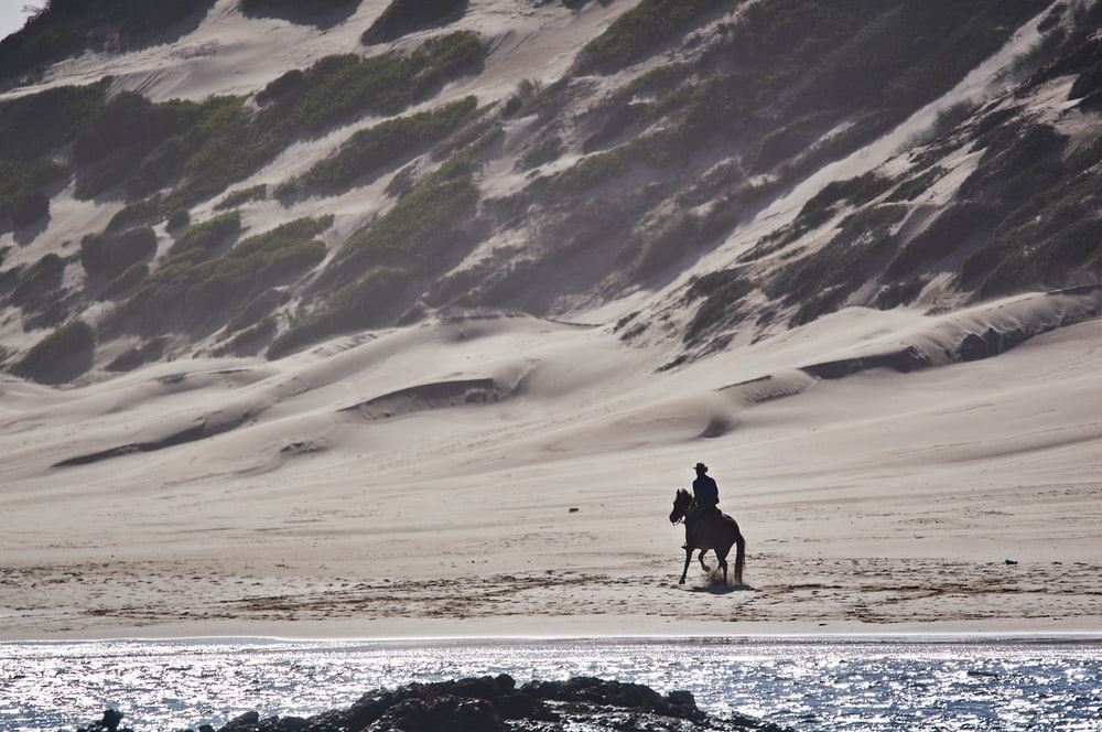 person riding a horse in a beach