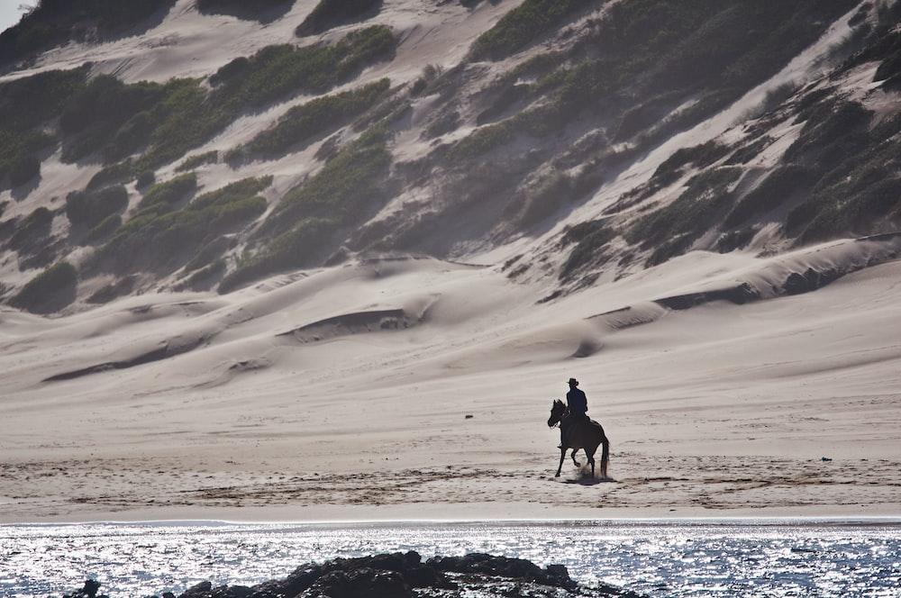 person riding a horse in a beach
