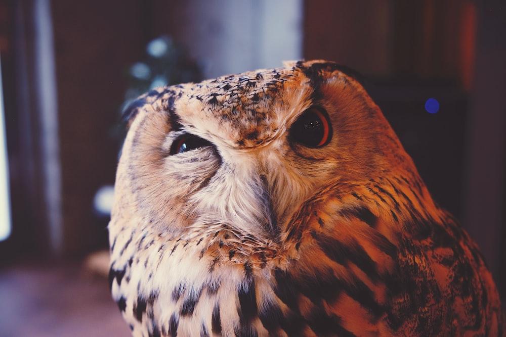 beige and black owl