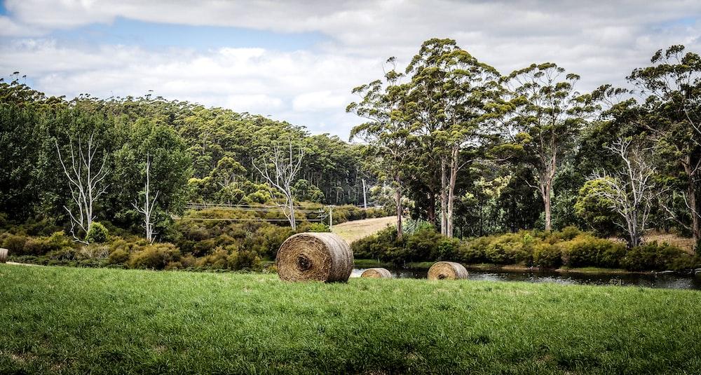 tree log on green grasses
