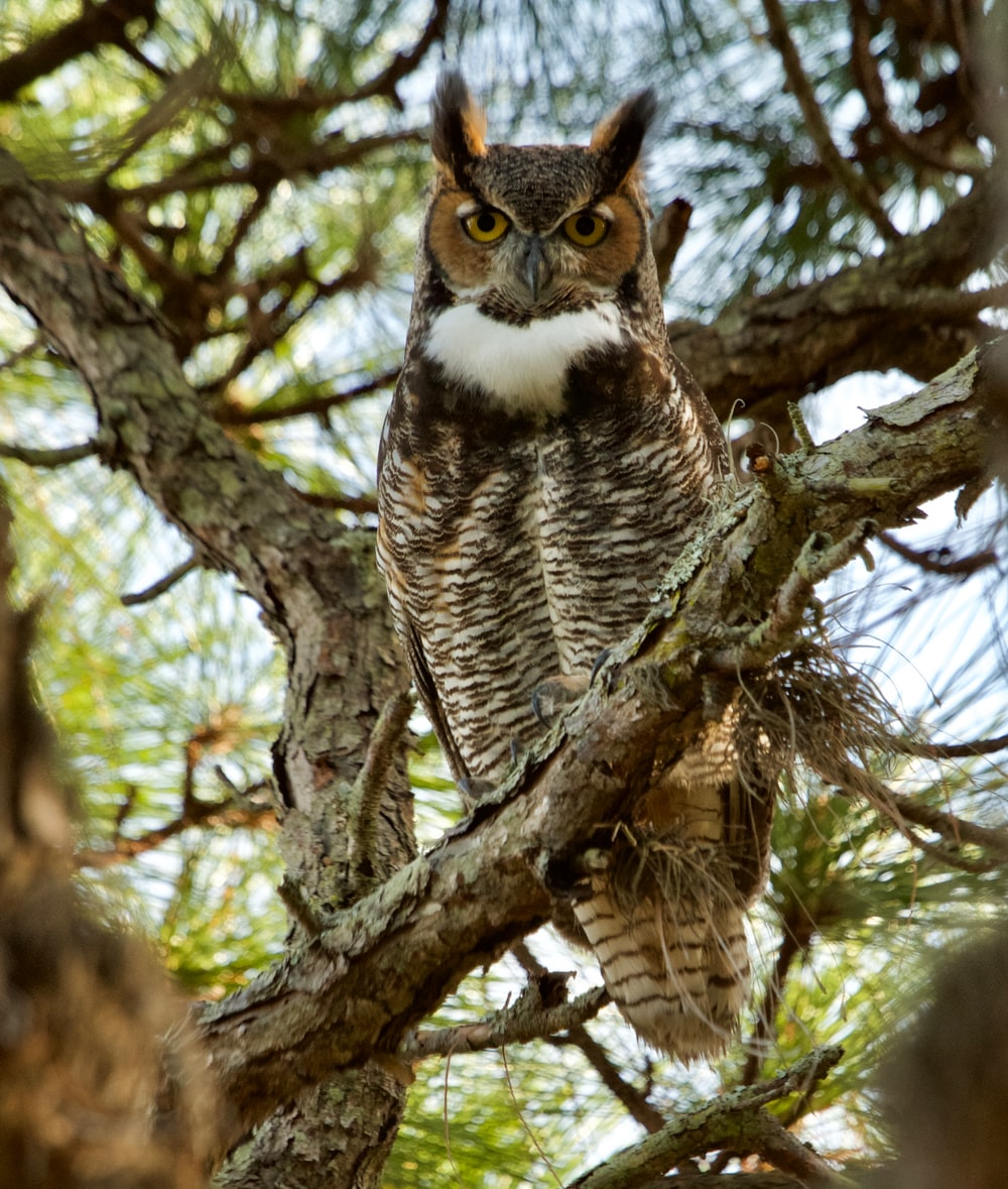 depth of field photography of owl on tree branch