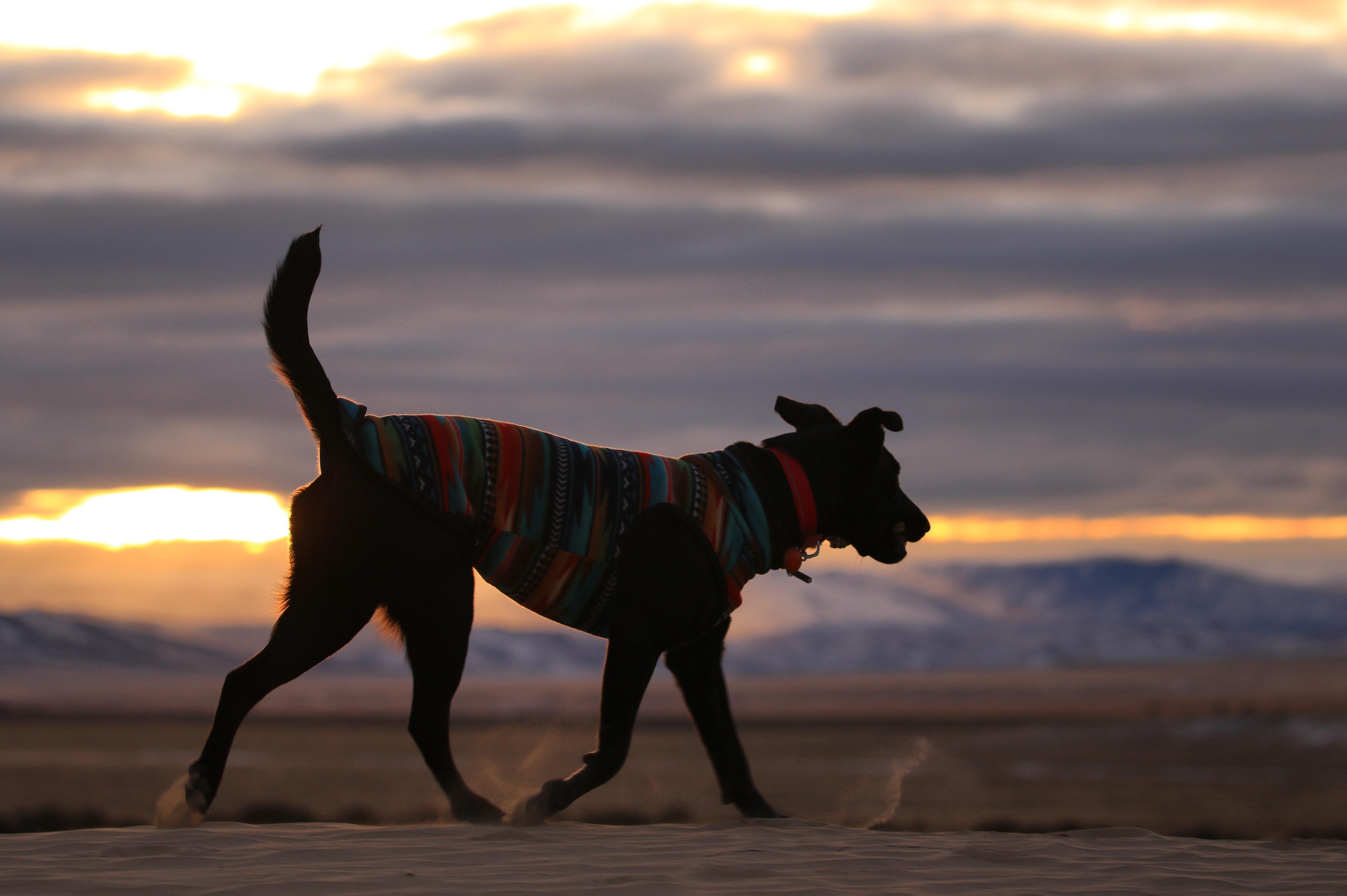 dog walking on road during dusk