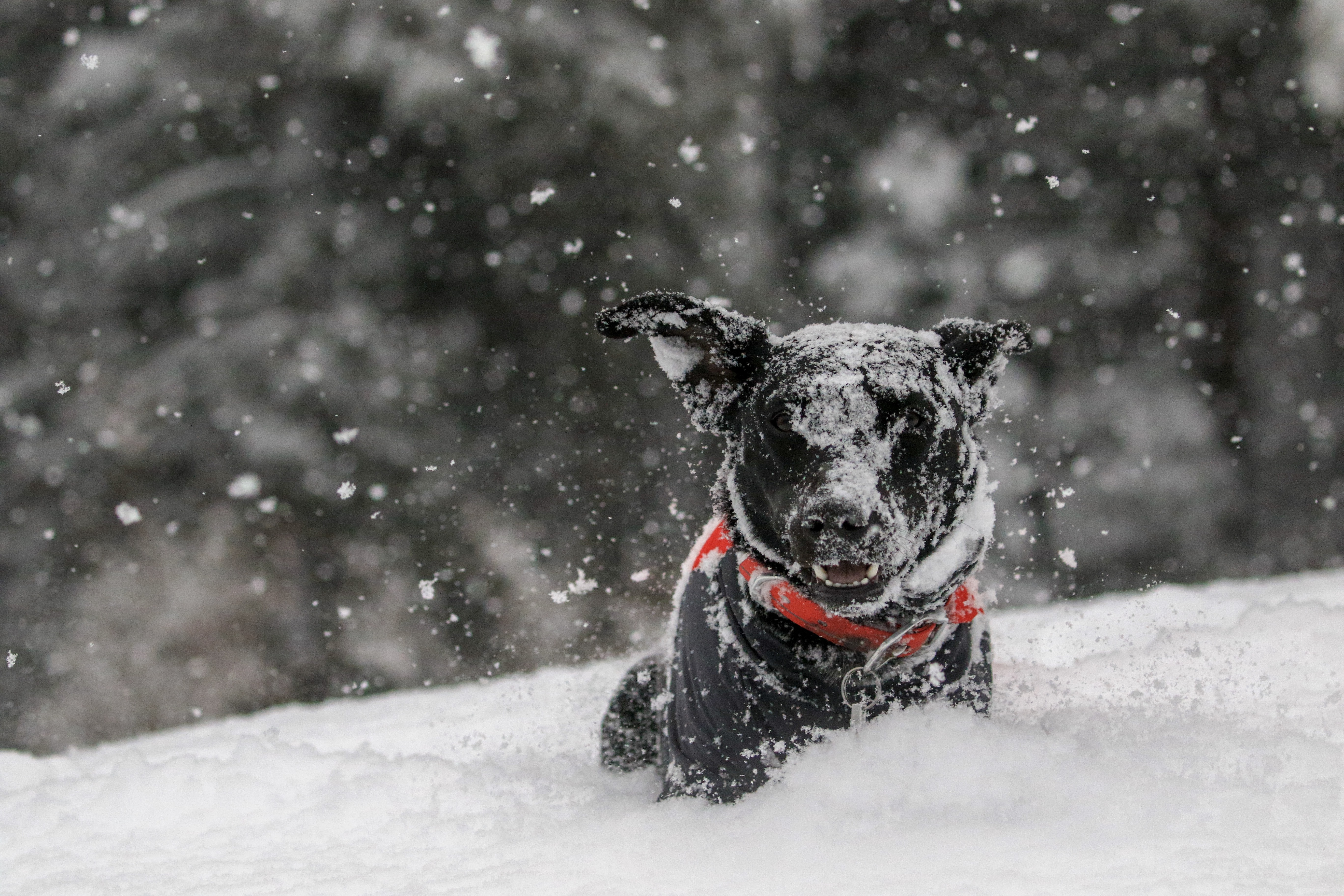 dog on snow covered field during day