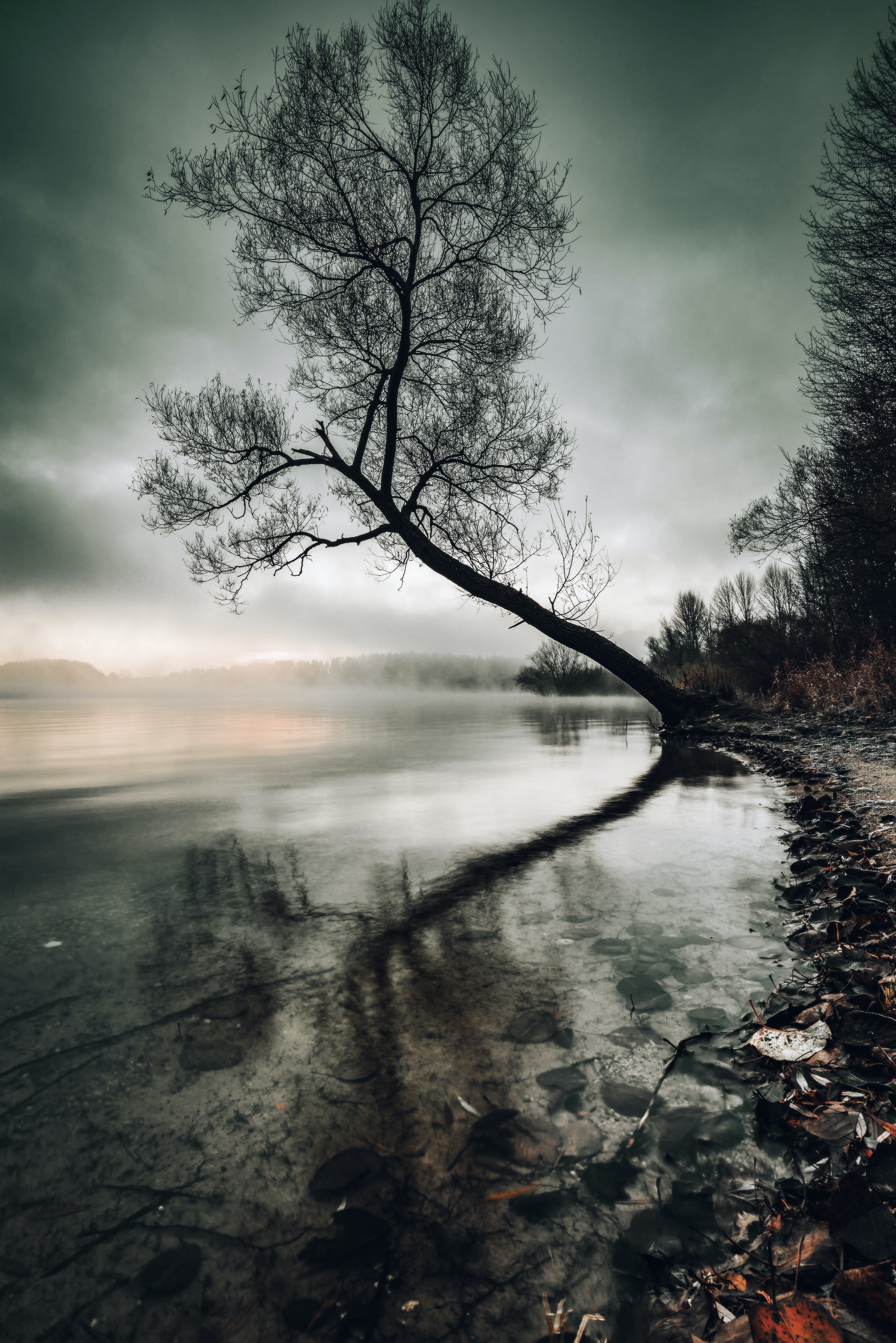 grayscale photo of tree beside body of water