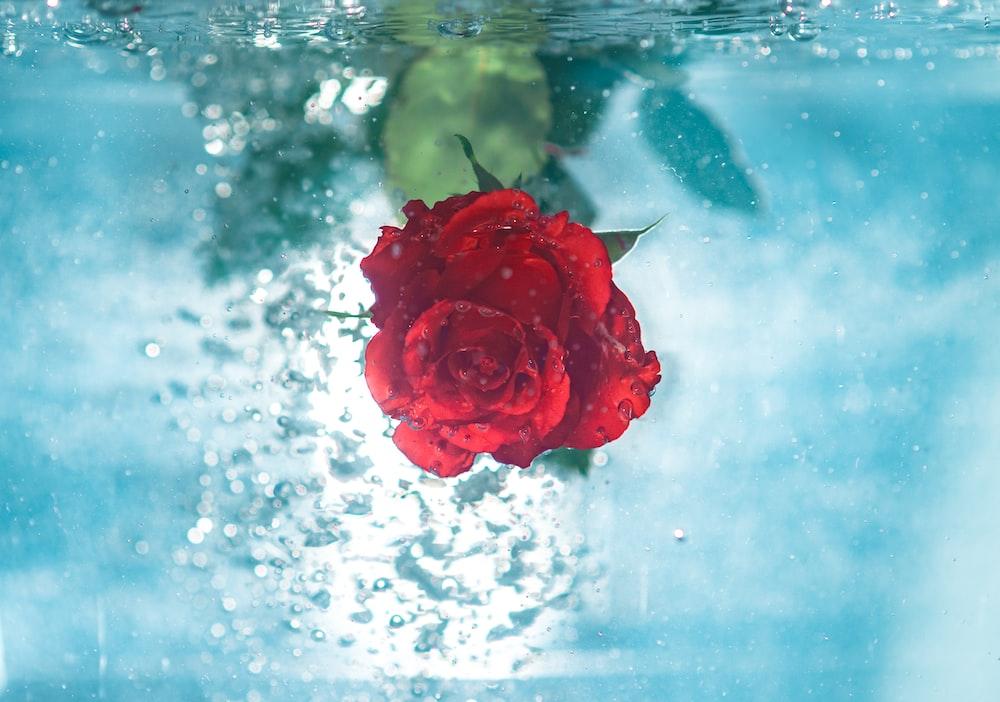 red flower under water