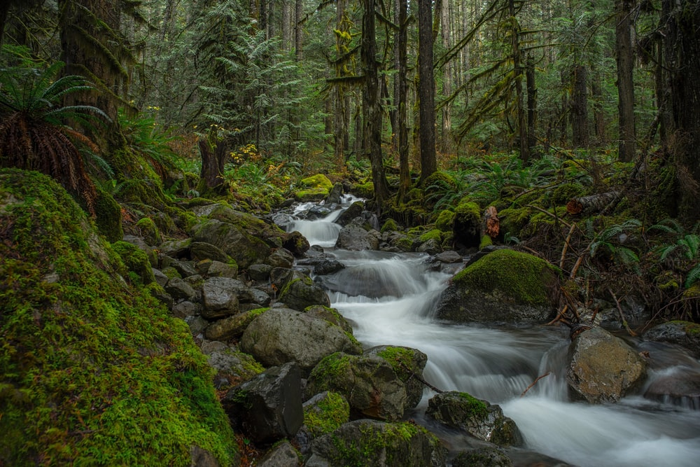 water flowing on forest