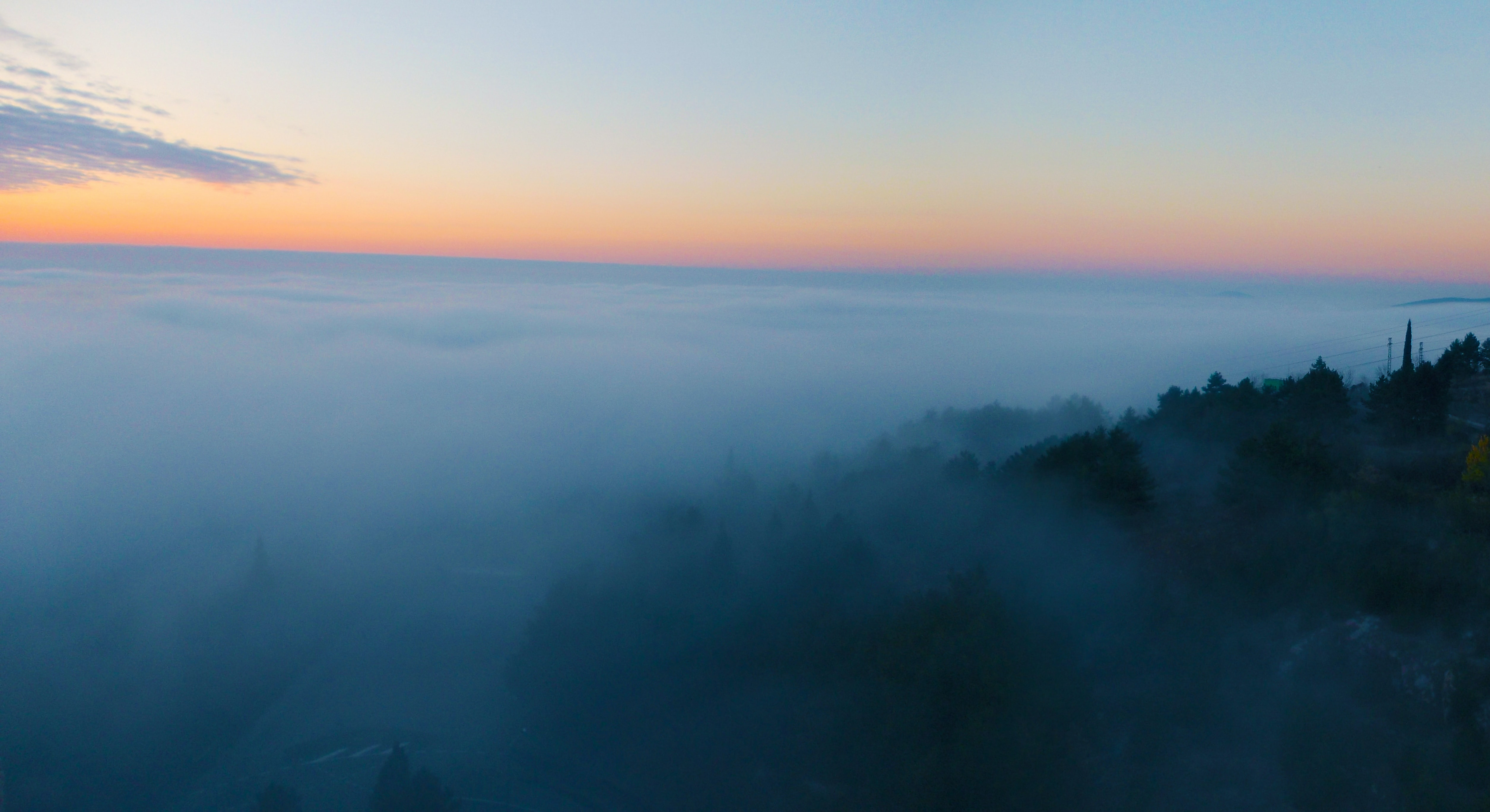 bird's eye view of forest with fog