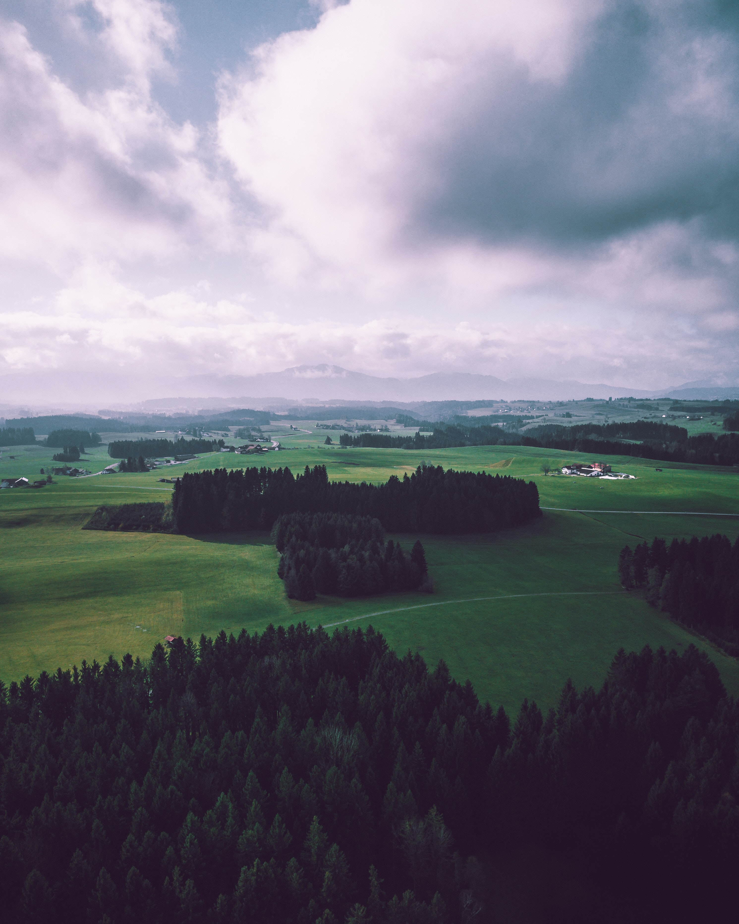 aerial photography of trees on grass field at daytime