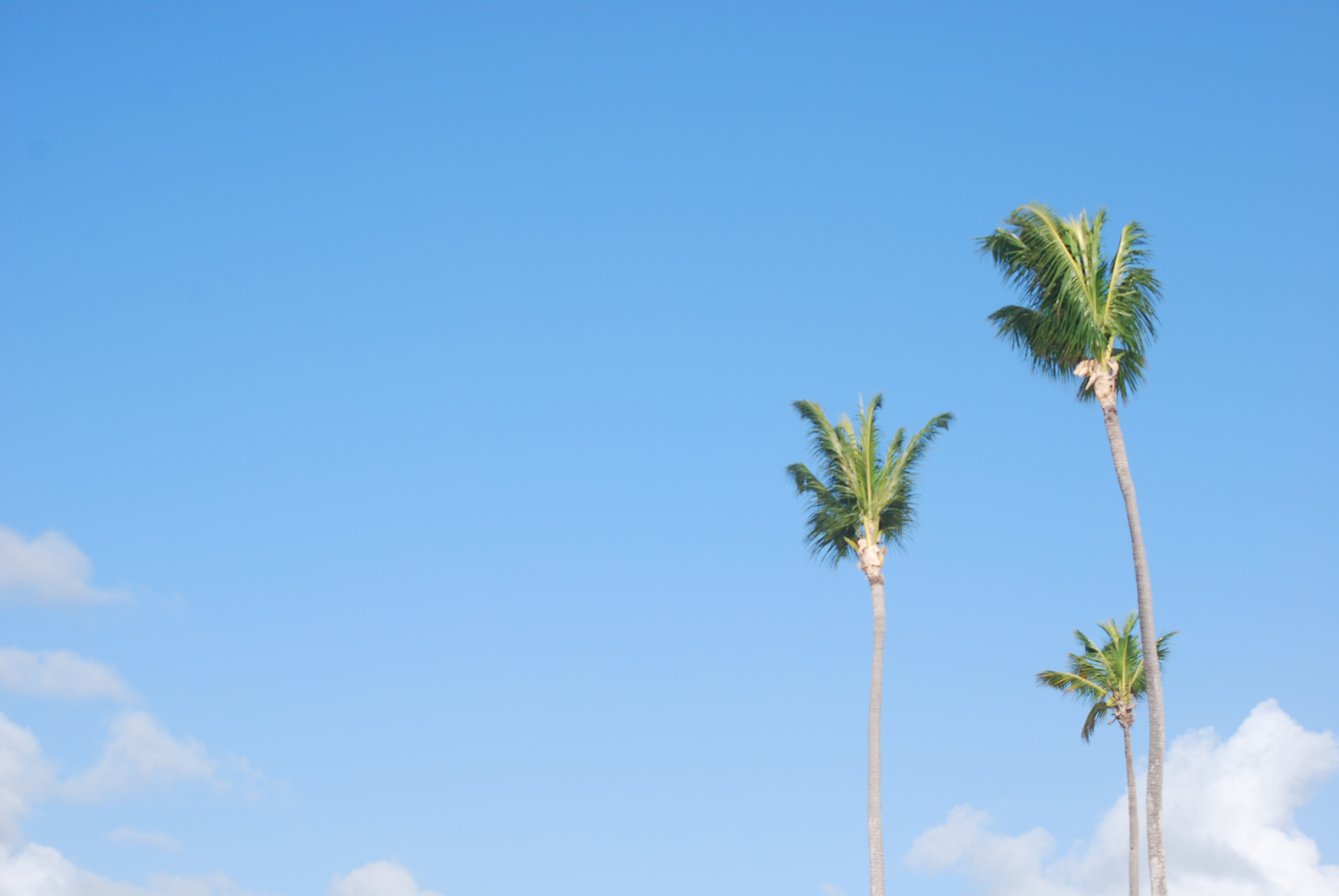 photo of coconut tree during daytime