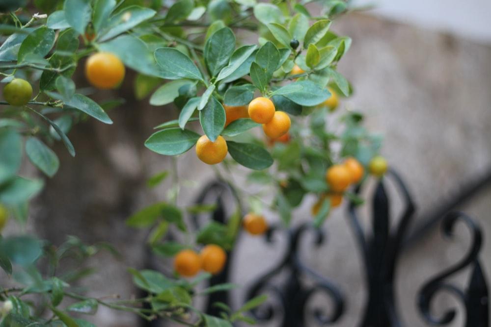 round orange fruits
