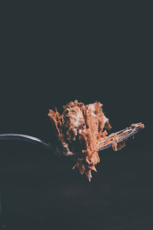 chocolate cake on fork close up photo