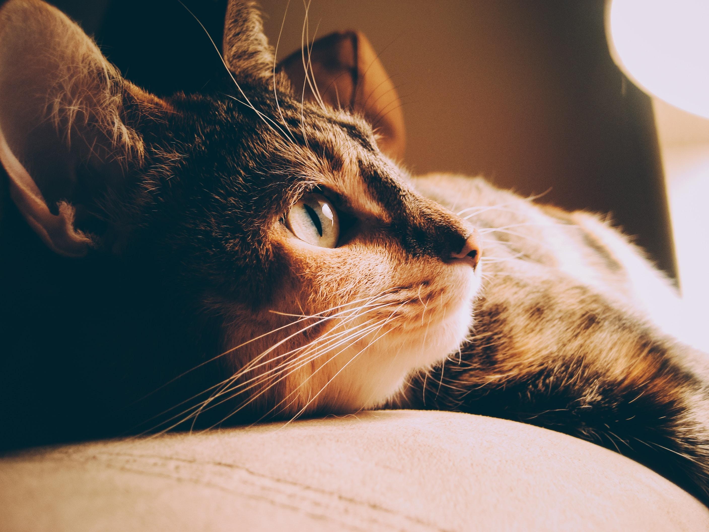 closeup photo of brown tabby cat near lamp