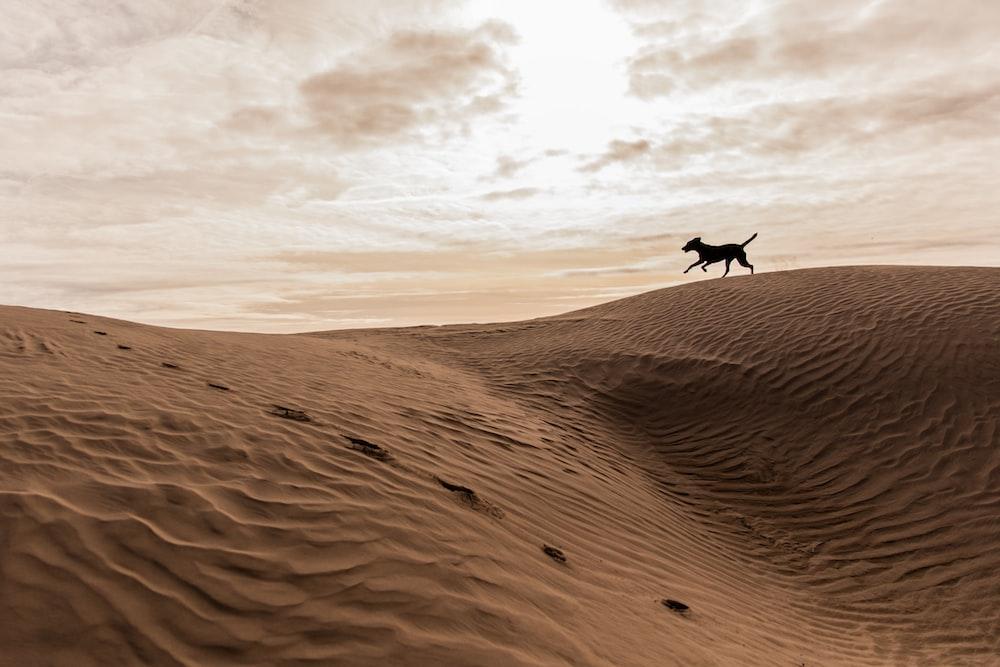 black 4-legged animal running on brown mountain under white cloudy sky