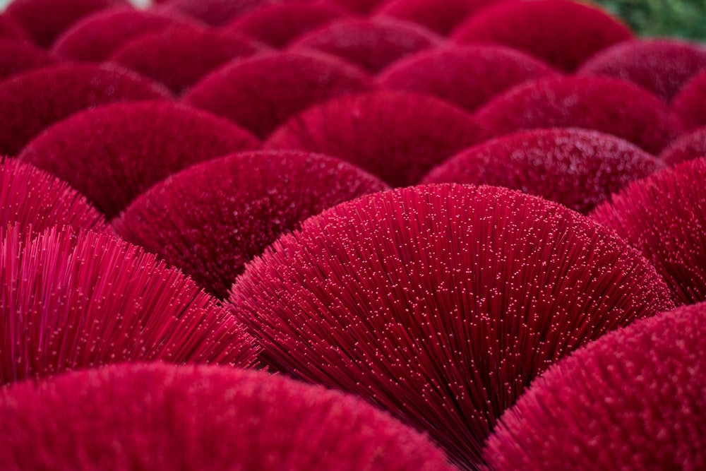 shallow focus photo of red plants